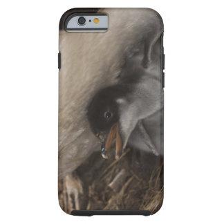 Gentoo Penguin (Pygoscelis papua) with chick, 2 Tough iPhone 6 Case