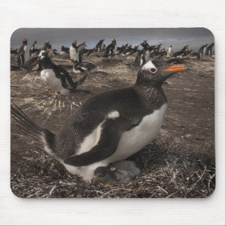 Gentoo Penguin (Pygoscelis papua) with chick on Mouse Pad