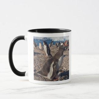 gentoo penguin, Pygoscelis papua, with chick on Mug