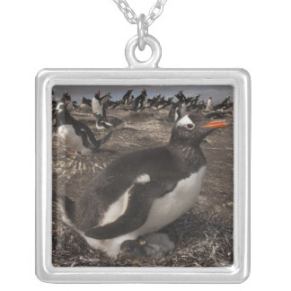 Gentoo Penguin (Pygoscelis papua) with chick on Silver Plated Necklace