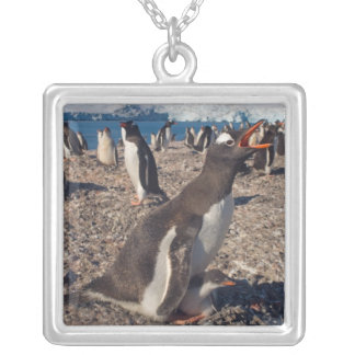 gentoo penguin, Pygoscelis papua, with chick on Silver Plated Necklace