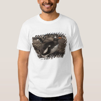 Gentoo Penguin (Pygoscelis papua) with chick on T-Shirt