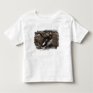 Gentoo Penguin (Pygoscelis papua) with chick on Toddler T-shirt