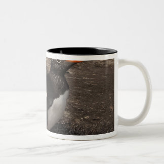 Gentoo Penguin (Pygoscelis papua) with chick on Two-Tone Coffee Mug