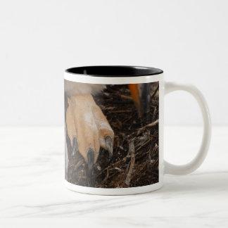 Gentoo Penguin (Pygoscelis papua) with chick, Two-Tone Coffee Mug