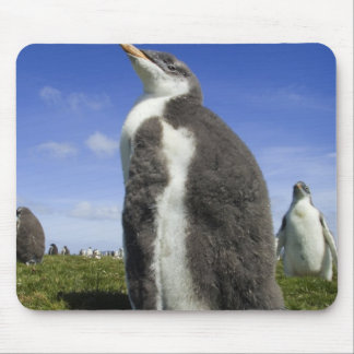 Gentoo Penguin, Pygoscelis papua, with fuzzy Mouse Pad