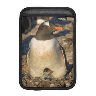 gentoo penguin, Pygoscelis papua, with newborn Sleeve For iPad Mini