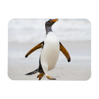 Gentoo Penguin Rectangular Photo Magnet