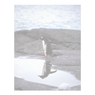 Gentoo Penguin - Reflection Letterhead