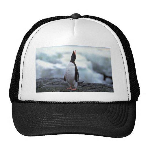 Gentoo Penguin Trucker Hat