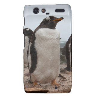Gentoo penguins droid RAZR case