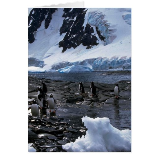 Gentoo Penguins Greeting Card