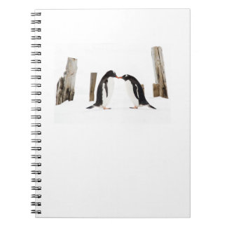 Gentoo Penguins Kissing notepad Notebook