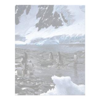 Gentoo Penguins Letterhead