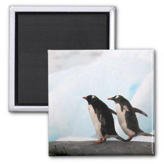 Gentoo penguins on rocky shoreline with backdrop 2 magnet