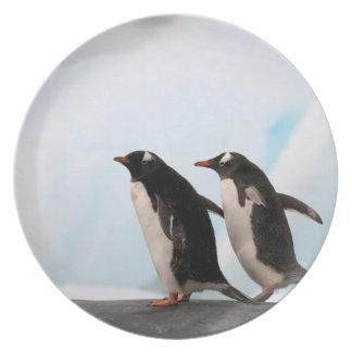 Gentoo penguins on rocky shoreline with backdrop 2 melamine plate