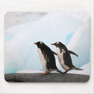 Gentoo penguins on rocky shoreline with backdrop 2 mousepad