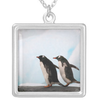Gentoo penguins on rocky shoreline with backdrop 2 silver plated necklace