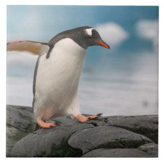 Gentoo penguins on rocky shoreline with backdrop 3 ceramic tile