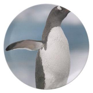 Gentoo penguins on rocky shoreline with backdrop dinner plate