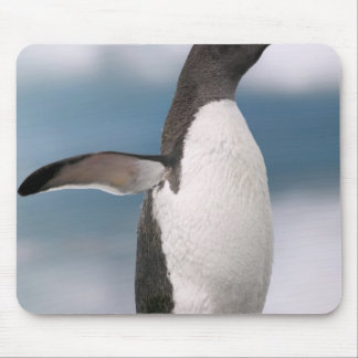 Gentoo penguins on rocky shoreline with backdrop mouse pad
