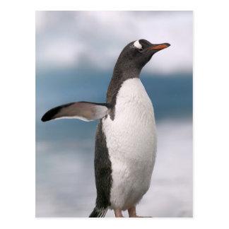 Gentoo penguins on rocky shoreline with backdrop postcard