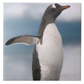 Gentoo penguins on rocky shoreline with backdrop tile