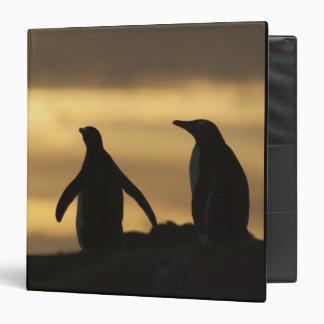Gentoo Penguins Pygoscelis papua) at sunset 3 Ring Binders