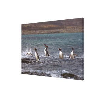 gentoo penguins, Pygoscelis papua, jumping out Gallery Wrap Canvas