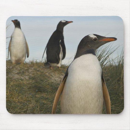 Gentoo Penguins (Pygoscelis papua), Keppel Mouse Pad