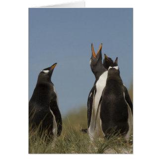 Gentoo Penguins (Pygoscelis papua) looking up, Card