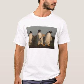 Gentoo Penguins Pygoscelis papua) on Sea Lion T-Shirt
