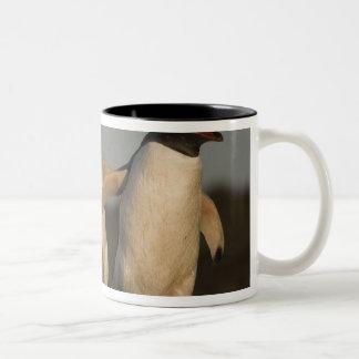 Gentoo Penguins Pygoscelis papua) on Sea Lion Two-Tone Coffee Mug