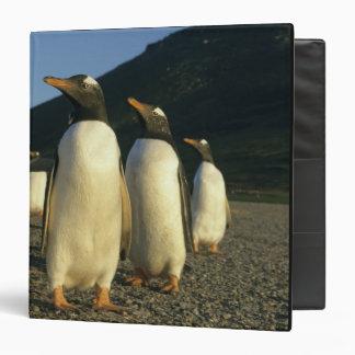 Gentoo Penguins, Pygoscelis papua), sunset, 3 Ring Binder