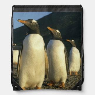 Gentoo Penguins, Pygoscelis papua), sunset, Drawstring Bag