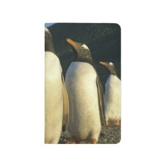 Gentoo Penguins, Pygoscelis papua), sunset, Journal