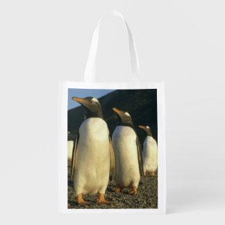 Gentoo Penguins, Pygoscelis papua), sunset, Market Totes