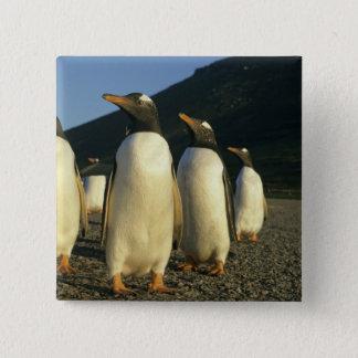 Gentoo Penguins, Pygoscelis papua), sunset, Pinback Button