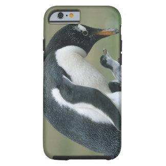 Gentoo Penuin, (Pygoscelis Papua), Malvinas Funda De iPhone 6 Tough