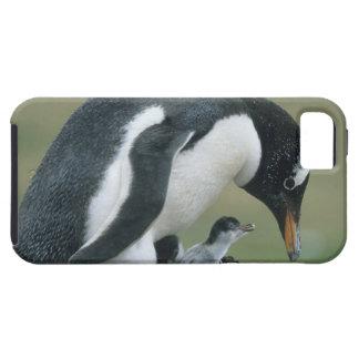 Gentoo Penuin, (Pygoscelis Papua), Malvinas iPhone 5 Carcasas