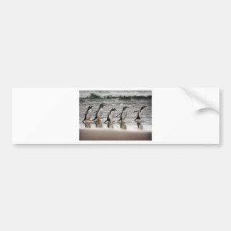 Gentoos on the beach bumper sticker