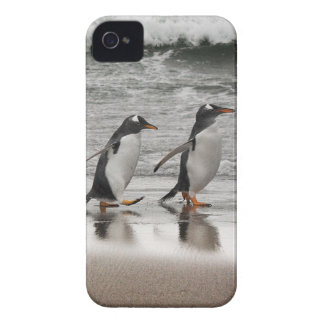 Gentoos on the beach Case-Mate iPhone 4 case