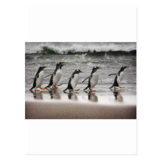 Gentoos on the beach postcard