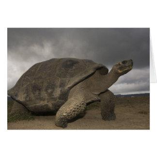 Geochelone de la tortuga gigante de las Islas Galá Tarjeta De Felicitación