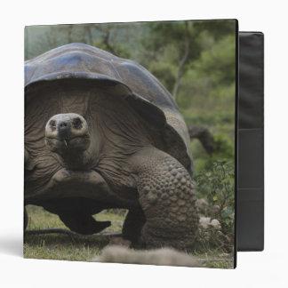 "Geochelone de las tortugas gigantes de las Islas Carpeta 1 1/2"""