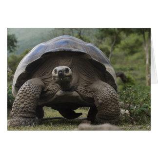 Geochelone de las tortugas gigantes de las Islas G Tarjeta De Felicitación