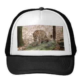 geoffroy-cat-001 trucker hats