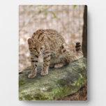 geoffroy-cat-001 placas de madera