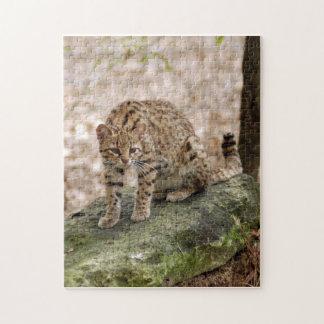 geoffroy-cat-001 puzzles con fotos