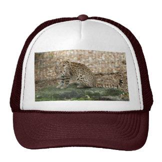 geoffroy-cat-002 trucker hats